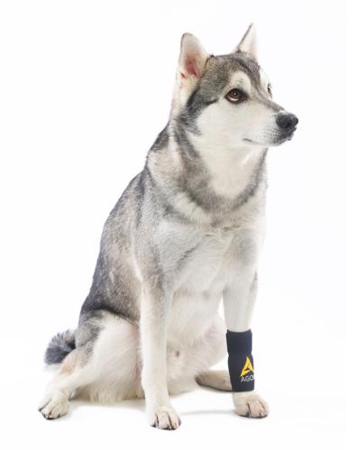 מגן תומך כלב קדמי