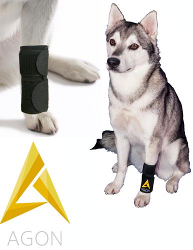 רגל צולעת כלב קדמי